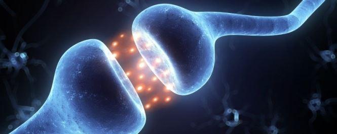 receptory CB1 i CB2 których pracę wspomaga Kanabialic